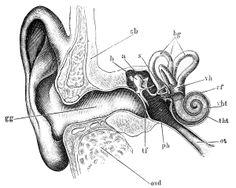 Natural treatment for tinnitus