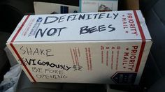 Well at least its not bees - funny, bees. New Memes, Funny Memes, Hilarious, It's Funny, Funny Quotes, Aaliyah, Charlie Kelly, Donald Trump, Mala Persona