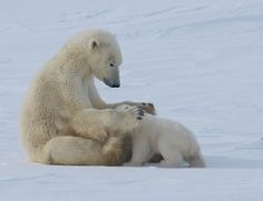Bonding with Mom Photo by Shannon Curtis -- National Geographic Your Shot