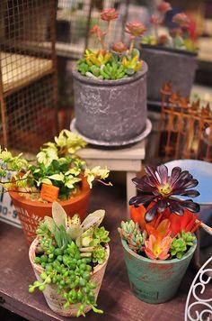 eclectic succulent pots