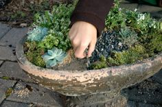 Fill a rustic bird bath w/ soil & plant a mini garden! Rustic Bird Baths, Dream Garden, Home And Garden, Growing Gardens, Sandy Soil, Small World, Fairy Gardens, Succulents Garden, Small Things
