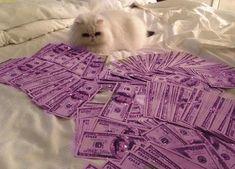 Cat with Glitter Money cute animals pink cat glitter money kitten gif