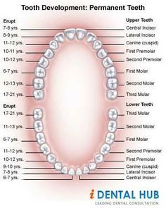 Tooth Development and Eruption