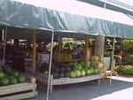 Local Farmers Market Guide for the Tampa Bay Area, Florida