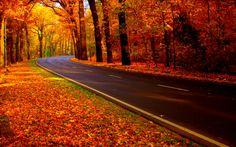 autumn road uploaded to CureZone by Folliculitis On CureZone Image ...