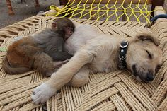There's Nothing Cuter Than These 30 Animals Using Other Animals As Pillows. I'm Dying Of Cuteness.