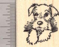 schnauzer pup