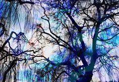 'Natur Abstrakt  29' von Walter Zettl bei artflakes.com als Poster oder Kunstdruck $22.17