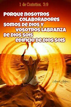 1 de  Corintios, 3:9 - Porque nosotros , colaboradores somos de Dios; y vosotros labranza de Dios sois, edificio de Dios sois.