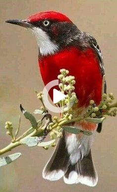 40 Ideas For Flock Of Bird Photography Most Beautiful Birds, Pretty Birds, Love Birds, Beautiful Pictures, Small Birds, Colorful Birds, Colorful Animals, Beautiful Creatures, Animals Beautiful