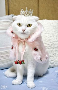 This is definitely not a happy princess kitty