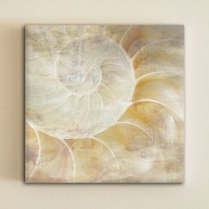 Sea Shell Canvas Art By One Design :: $39 :: Beautiful neutrals with a casual, but unexpected vibe. It's like peeking in a vacation.