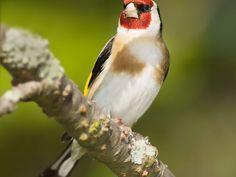 Las aves mas hermosas del mundo en HD,Nuevas Imágenes - Taringa!