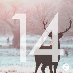 Free Font , Template , Mockup , Icon Set and other Creative download for Designer . Advent Calendar