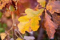 Oak by TalyaPhoto on @creativemarket