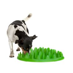 The coolest dog toys ever! We have the toughest chew toys ever made, the best interactive dog toys, dog puzzles & treat toys. Slow Feeder, Pet Feeder, Pet Shop, Dog Puzzles, Dog Food Bowls, Interactive Dog Toys, Dog Feeding, Pet Gifts, Gadgets