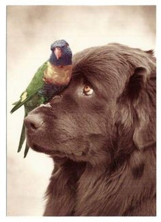 Bird's best friend too.