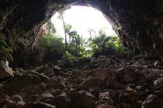 Interior View of Cave Entrance Cave Entrance, Doorway, Caves, Destruction, New Zealand, Terrace, Park, Interior, Plants