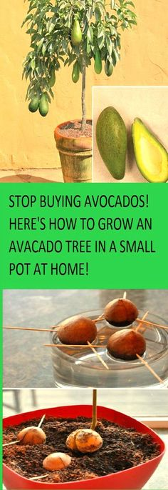 Health-conscious people have gone crazy for avocado and avocado dips. Now you can freely enjoy your guacamole without feeling guilty,…