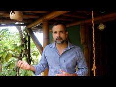 Bambu, benefícios, qualidades, usos e outros que tais - greenMe.com.br