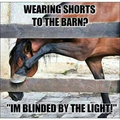 Lol!!! Soooo true!! My arms and face are always 10 shades darker than my legs!! If only riding horses in shorts wasn't so painful!haha