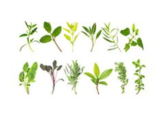 Herb Glossary of Benefits: every herb and spice you could possibly think of and their health benefits.