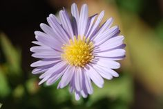 Not all plants have flowers, but those that do are widespread and abundant. Flowers are important because they attract pollinators and are where the seeds develop. Our post today is inspired by the… All Plants, Garden Plants, Plant Science, Growing Flowers, White Flowers, Stock Photos, Post Today, Science Activities, Gardening