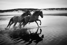 Wild Horses running free, Feet pounding to my wild heartbeat, On the prairies and out to seas, Return to me and bring me peace