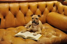 The Battery Park Book Exchange is a pet friendly book exchange store that serves amazing champagne. Does it get any better? #Asheville