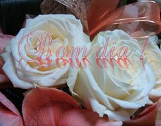 Rosas especiais - Bom dia!