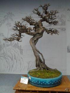 Bonsai shows en tentoonstellingen in 2013 - Bonsai Empire