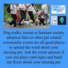 A tip from our friends at Lost Dogs of America: Fall weekends are busy with dog walks, adoption fairs and other community events. Use the opportunity to get the word out about your missing dog!