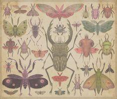 Vladimir Stankovic's Entomology illustrations