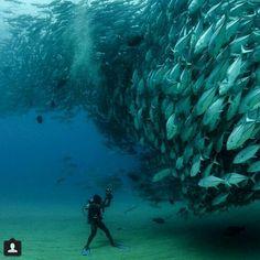 Man vs fish :p