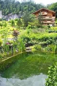 Tout sur la piscine naturelle