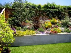 Gorgeous globes of sea lavender punctuate a constellation of African daisies and coreopsis in this garden, which is as colorful as it is droughtproof