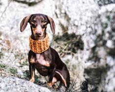 Ma egy kicsit nosztalgiáztunk. 😌 Ez a kép akkor készült, amikor először engedtük el Nudlit, miközben másztunk fel egy sziklás részen, nehogy visszarántsuk őt egy rossz lépés alkalmával.🐶 Az első sziklamászós kalandja Nudlinak🧗, nagyon ügyesen vette az akadályok, igazi hegyitacskó.🐐 Ti hol kalandoztatok utoljára?🥰 Instagram Feed, Dogs, Animals, Animales, Animaux, Pet Dogs, Doggies, Animal, Animais