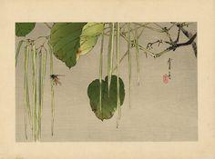 hanga gallery . . . torii gallery: Japanese catalpas and bee by Watanabe Seitei
