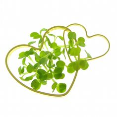 Arugula sprouts in gold hearts