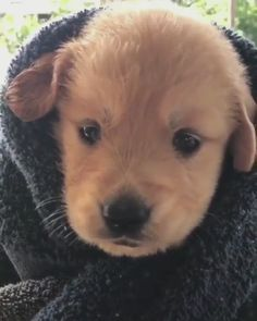 Enjoy new funniest and very cute compilation of the week about try not laugh funny animals' life video. Dogs are awesome animals. Super Cute Puppies, Cute Baby Dogs, Cute Little Puppies, Cute Dogs And Puppies, Cute Little Animals, Cute Funny Animals, Pet Dogs, Pets, Doggies