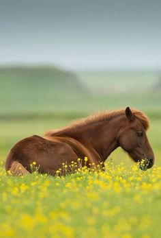 Such a beautiful picture of a horse