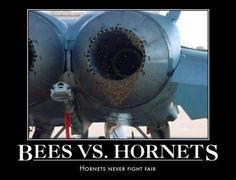 military-humor-air-force-aircraft-bees-vs-hornets