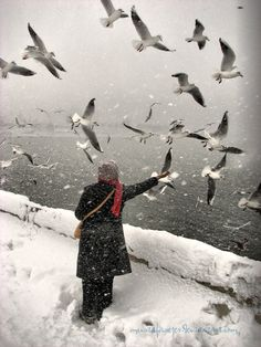 Snow and Birds  by *MustafaSEZER