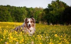 #Antipulci naturali per cani, l'olio di #neem è un rimedio efficace @greenpinkorg
