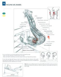 Incline Leg Raises ♦ #health #fitness #exercises #diagrams #body #muscles #gym #bodybuilding #legs