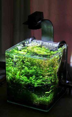 explore plante pour aquarium