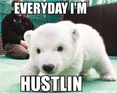Polar Bear be struttin'.