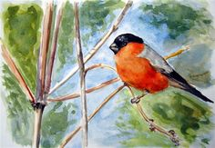 """""""Bullfinch"""" - Original Fine Art for Sale - © Ulrike Miesen-Schuermann"""
