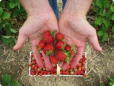 canning 101: small batch strawberry jam
