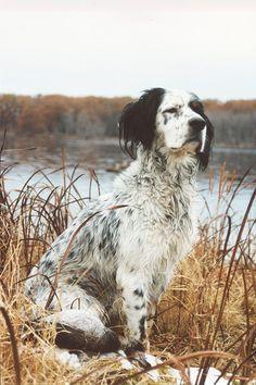 Luna & Hazel #gundogs #sporting art #birddogs #setter